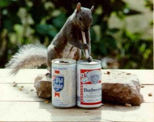 squirrelbeer