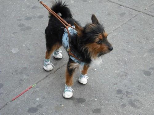 SneakerDog